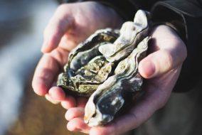 workshop_oysters_arcachon